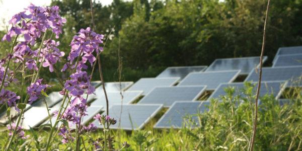 NL Solarpark de Kwekerij